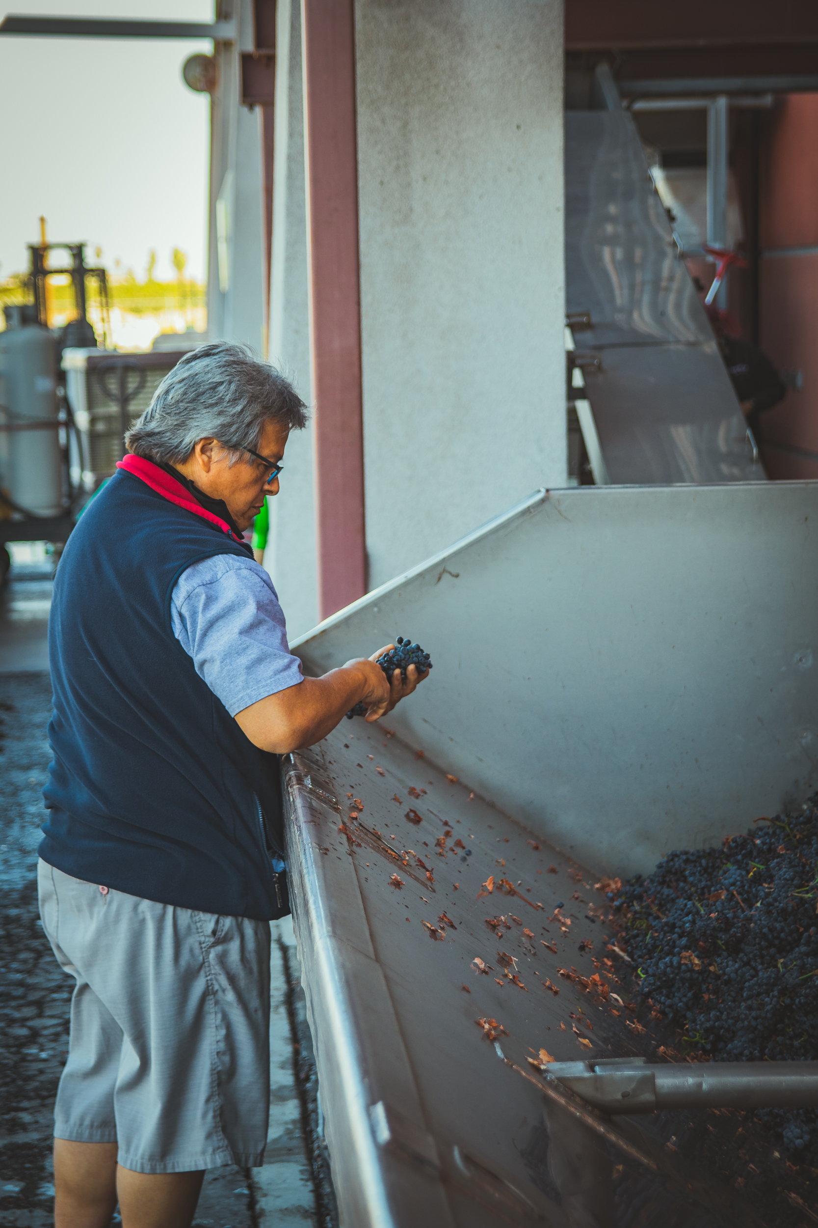Dan our production manager inspecting grapes from the press